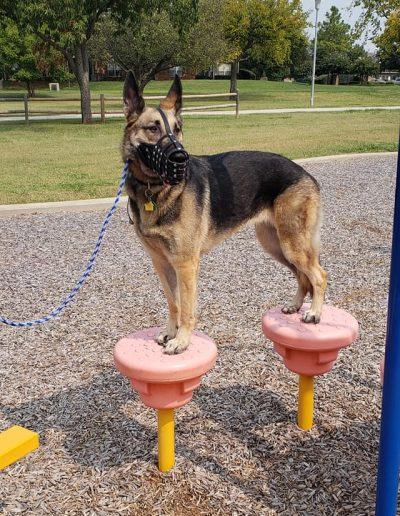 Tricks Training