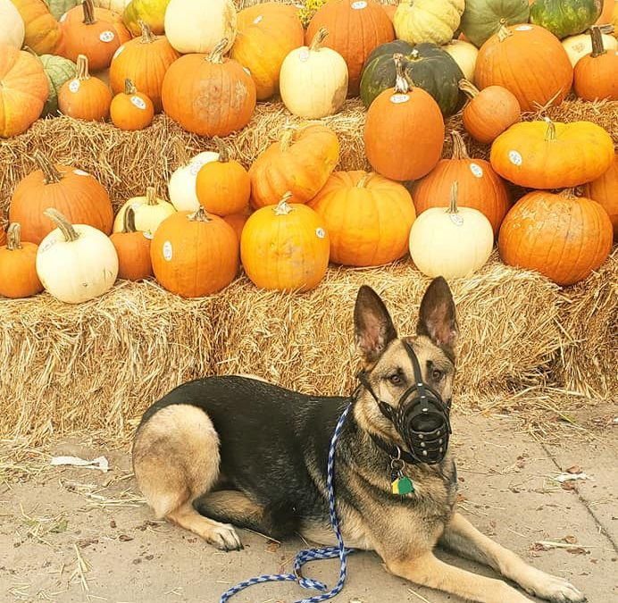 Canine Good Citizen (CGC)