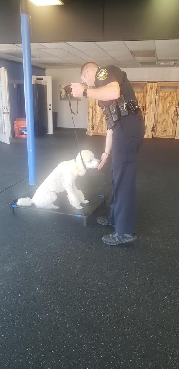 Assessment With a Paws 4 Purpose Trainer